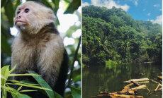 Dabas parks Kostarikā jeb Viena no bioloģiski daudzveidīgākajām vietām pasaulē