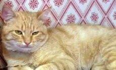 Vai mājas kaķis var saķert vīrusus?