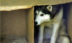 Medijs: Pasaules kauss apdraud klaiņojošos suņus Krievijā