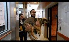Video: Vašingtonā ierodas izglābtie Soču klaiņojošie suņi