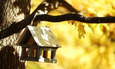 Ceturtdiena Latvijā būs aukstākais 8.oktobris novērojumu vēsturē