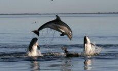 Ukrainas kaujas delfīni oficiāli pārgājuši Krievijas pakļautībā