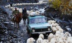 Foto: Kā avis, suņi un gani mēro bīstamu kalnu ceļu uz Kahetijas līdzenumiem