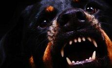 Suns sakodis raitā solī garām ejošu cilvēku