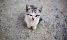 Ukrainas medijs slavē armiju par labsirdību pret kaķēniem