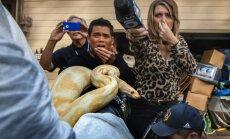 Šausmu māja: ASV skolotājam atņem 400 čūskas