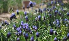 Fotoieskats pavasara ieskautajā Salaspils botāniskajā dārzā