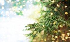 Āgenskalnā krāšņi iemirdzēsies Ziemassvētku egle