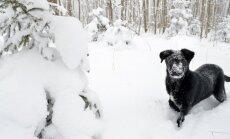 Синоптики: в ближайшие дни в Латвии будет снежно