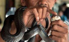 Džakartu piemeklējusi 'čūsku problēma'