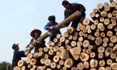 Они готовы купить все. Как латвийская древесина выходит на китайский рынок