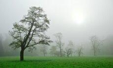 Kā pēc nāves kļūt par koku?