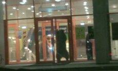 Video: Lācis vientuļi ālējas pa Krievijas lielveikalu