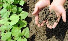 """Севооборот """"травы"""" на даче: Как правильно чередовать грядки и совмещать растения"""