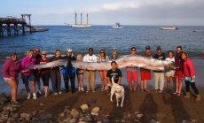 Kalifornijā atrasta milzu airzivs