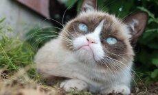 Interneta stilīgākie kaķi vienojas kopīgā Ziemassvētku dziesmā