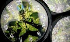 Kanāda kā pirmā no G7 valstīm legalizē marihuānas lietošanu izklaidei