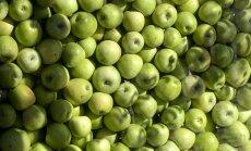 Krāpšanas dēļ ES aptur kompensāciju izmaksu augļu un dārzeņu ražotājiem