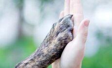 Nežēlīgā suņa spīdzināšana Ķengaragā: vienkārši gribēju draugu, apgalvo aizdomās turētais