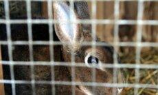 Vāc parakstus pret sprostu sistēmu izmantošanu lopkopībā