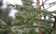 Ziema vairs nav aiz kalniem – padomu ābece dažādu augu piesegšanai un ieziemošanai