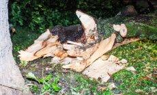 Главные дороги расчищены от поваленных деревьев