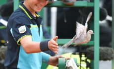 Ballboy waves a pigeon, tennis