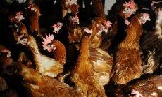 'Rimi' sola no 2025. gada pārdot tikai ārpus sprostiem turētu dējējvistu olas