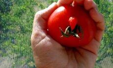 Satraucoši un divdomīgi – 'Delfi' lasītāji aktīvi ziņo par atradumiem dārzos
