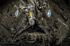 Monstri no jūras dzelmes: kādas radības mīt 30 metru dziļumā