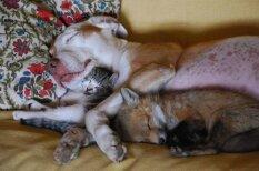 Царство сна: спящие животные, которые растопят твое сердце