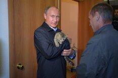 Путин сфотографировался с котиком на руках (+16 зверей, которым также повезло)