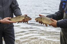 Ezeros papildina zivju krājumus
