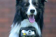 Unikāli foto, ko uzņēmis pasaulē pirmais suns - fotogrāfs