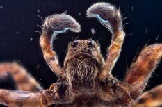 Krievu programmētājs dod iespēju ielūkoties kukaiņu acīs