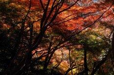 Skaistas vietas visā pasaulē, kur baudīt zelta rudeni