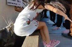 ВИДЕО: Морской лев затащил девочку под воду (с ней все хорошо)