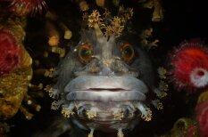 2015. gada labākās fotogrāfijas, kas uzņemtas zem ūdens