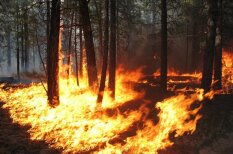 Uzmanīgi ar uguni: kā pasargāt mežu no ugunsnelaimes?