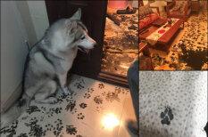 Семья оставила лайку на три часа — собака сделала редизайн квартиры