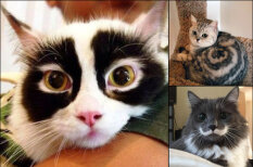 Мурлыки с изюминкой: 20 ФОТО котов с самой необычной раскраской шерсти