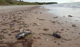 """ФОТО: """"Их сотни!"""" Пляж Лабрага усеян мертвой рыбой"""
