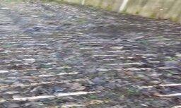 Video: Dienu pēc Lielās talkas Indrupes ielā Rīgā gulst atkritumi