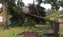 """Читательница об урагане в Саулкрасты: """"С моей мамы потребовали деньги за уборку упавшего дерева"""""""