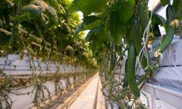 'Mārupes siltumnīcu' apgrozījums pērn audzis par 32,7%