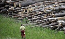 Lietuviešiem top lielākā kokzāģētava Baltkrievijā