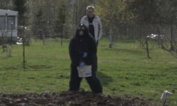 Amizants video: 'Lauku sētas' saimniece Sarmīte pērtiķa kostīmā mēslo lauku