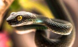 В Латвии двух человек укусили змеи