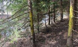 Ceturtdien Latvijā dzēsti četri meža ugunsgrēki
