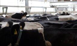 Lai arī situācija nozarē ir uzlabojusies, piena ražotāji joprojām nejūtas stabili